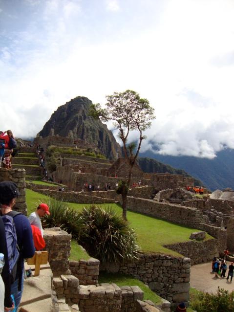 A Tree Grows on Machu Picchu