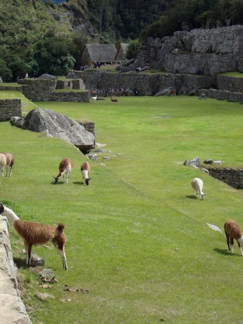 I didn't see any llamas wearing pajamas...