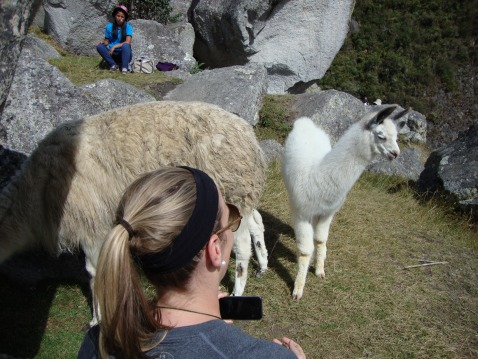 The baby llama was curious but shy.