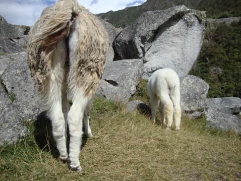 No butts about it, Machu Picchu is amazing.