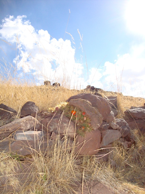 Flowers growing among the rocks.