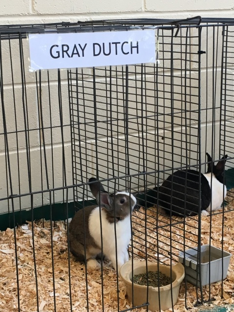 Duck, Duck, Gray Dutch. Just kidding, everyone knows its Goose.